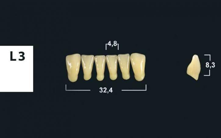 TRIBOS 501 Kunststoffzähne L3-UK-B3